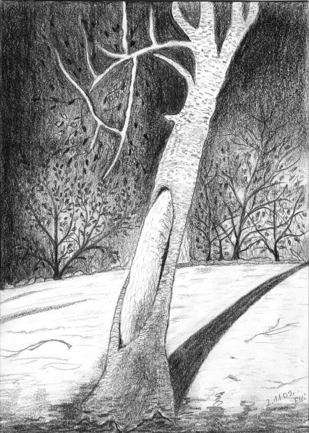 Der abgestorbene Baum (Bleistift) | Größe: 21 x 30 cm