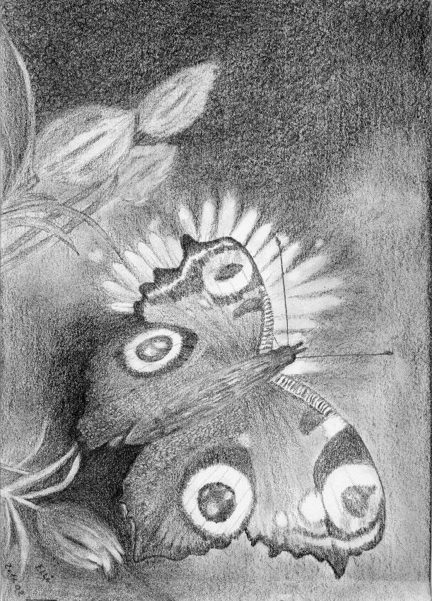 Schmetterling (Bleistift) | Größe: 21 x 30 cm