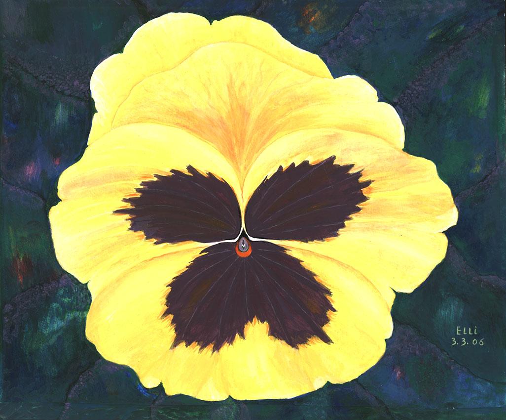 Riesenstiefmütterchen in Gelb | Größe: 36 x 30 cm