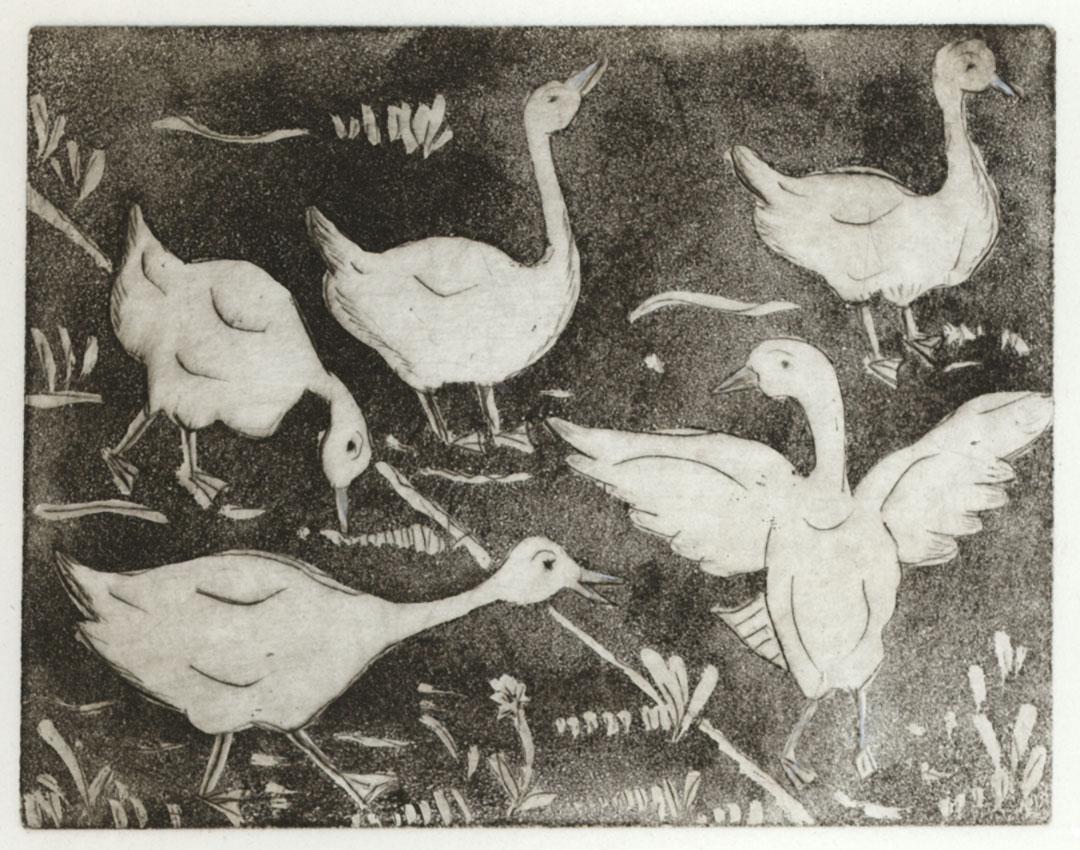 Weisse Gänse (Radierung) | Größe: 17 x 13 cm