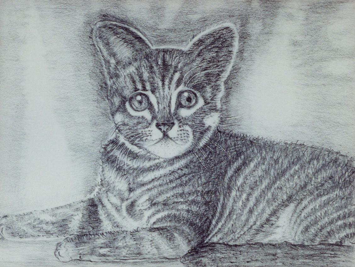 Katze (Bleistift) | Größe: 30 x 21 cm